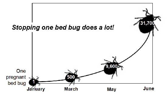 What Are Bed Bugs Learn About Bed Bugs From The Largest Bedbug Site