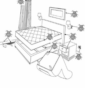 diagram of bed bug hiding places in bedroom
