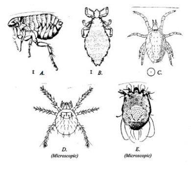 common biting index - illustrations - 390px x 345px