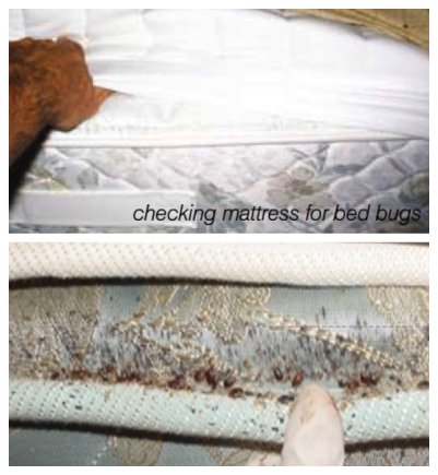 clean mattress and mattress with signs of a bed bug infestation