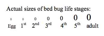 Bed Bugs Pictures: Actual Size, Stages and Skin Bites