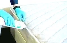 bed bugs mattress dust treatment