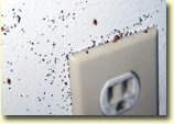 bed bug infestation around electrical outlet