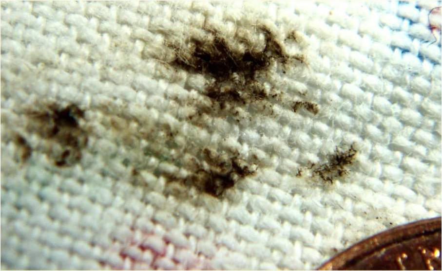 Brown spots from bed bugs on a mattress