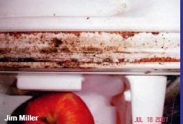 Bed Bug in Refrigerator Edges