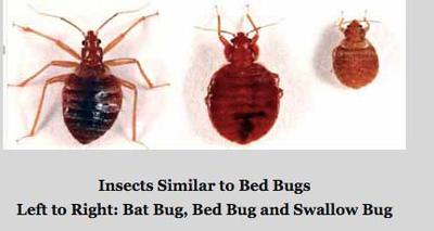 Is This A Bed Bug