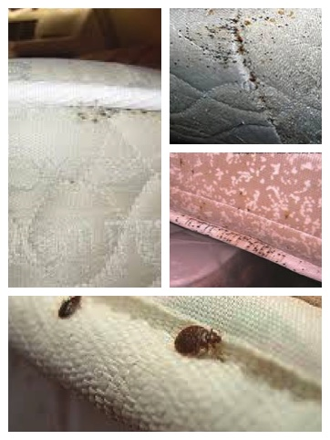 bed bug signs on mattress