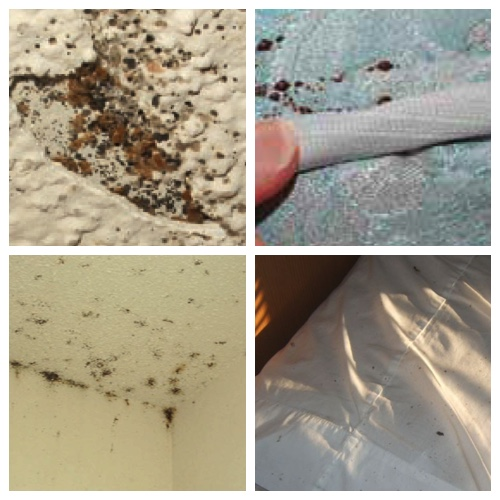 4 signs of bed bugs - on wall, mattress and pillow