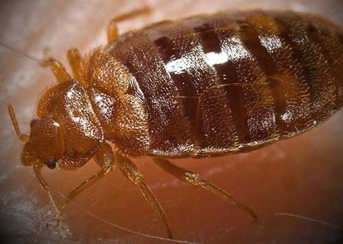 Guide To Where Bed Bugs Hide Room Diagrams Tips