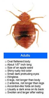 Bed Bug Identification - Features List and Picture