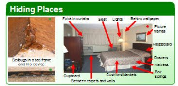 bed bug hiding places - diagram