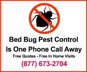 bed bugs banner for an exterminator